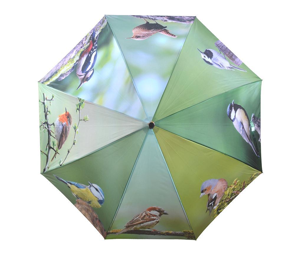 Umbrela Birds