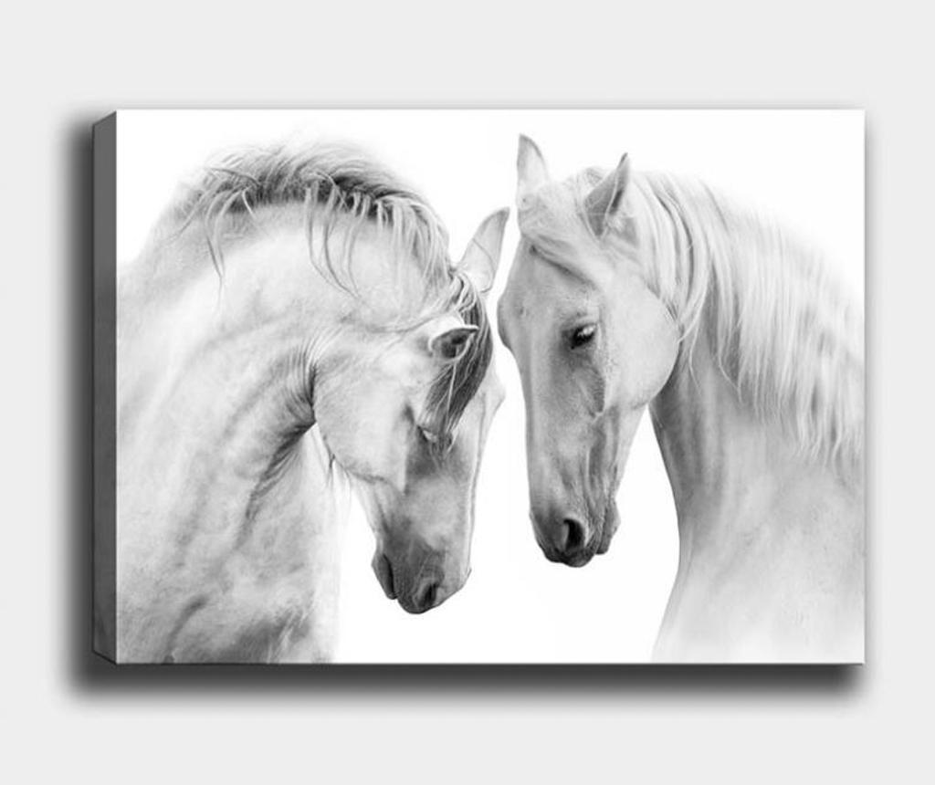 Obraz Horse 50x70 cm